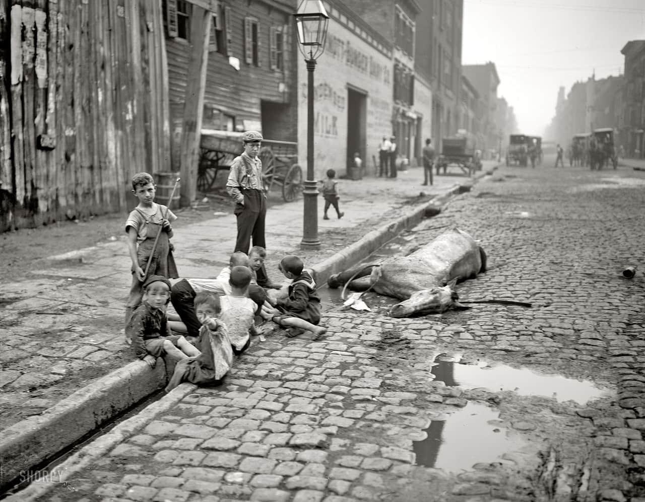 Dead horse left in the gutter, ca 1900